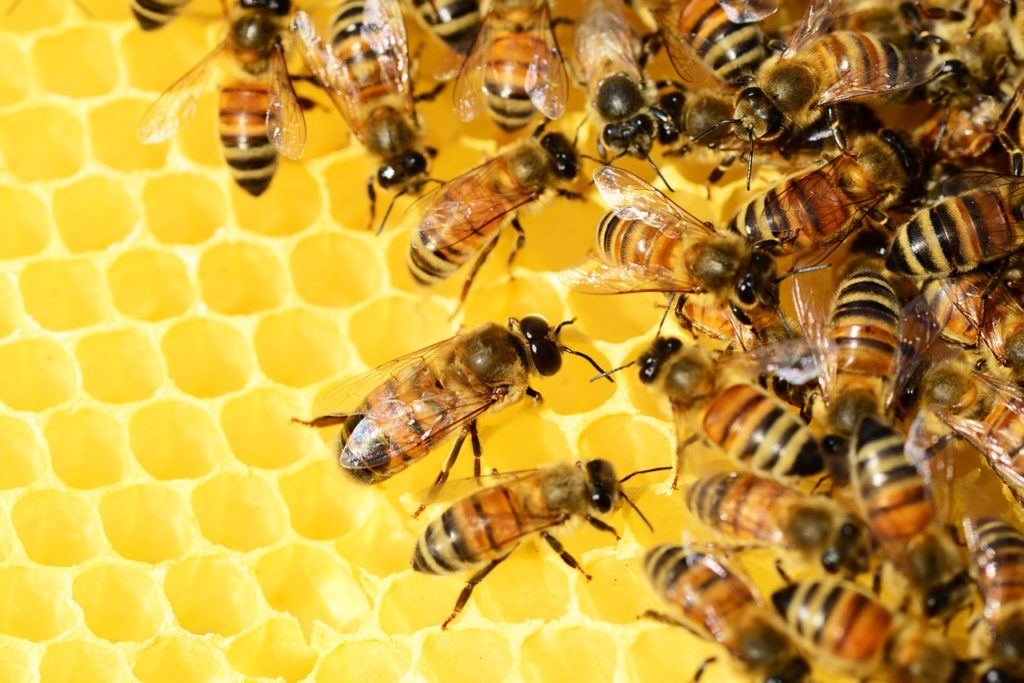 What Classification of Food is Honey