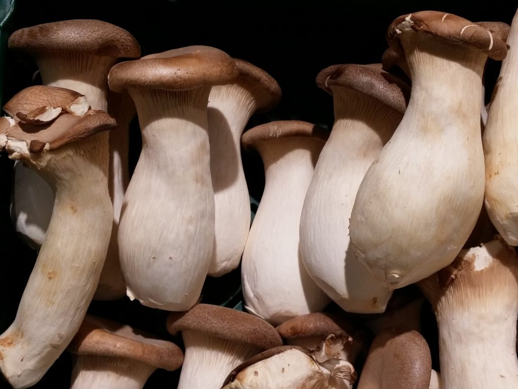 Mushroom Sauce- substitute for oyster sauce